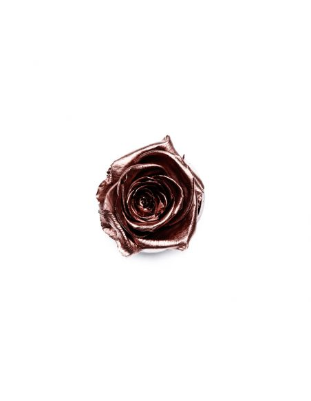 XS - Premium Rose - En Vogue - Rosegold